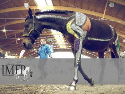 IMFP Pferd
